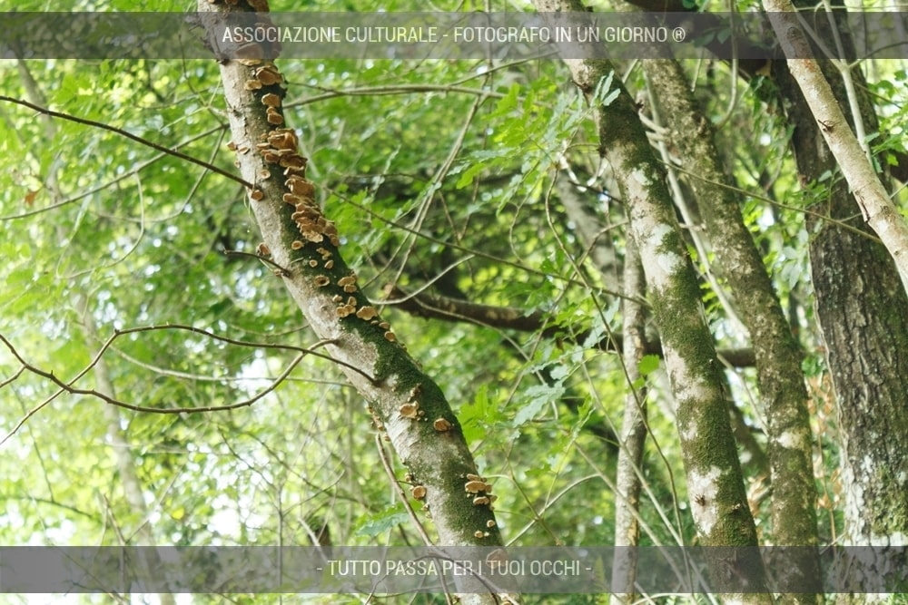 caccia-fotografica-ai-folletti-del-bosco-04-min