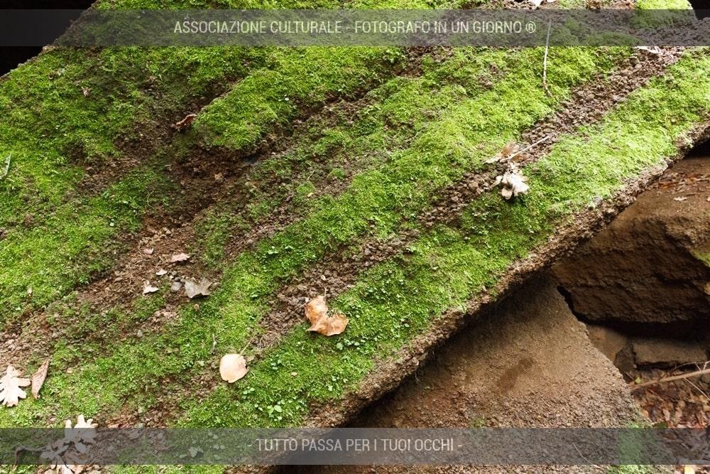 caccia-fotografica-ai-folletti-del-bosco-19-min