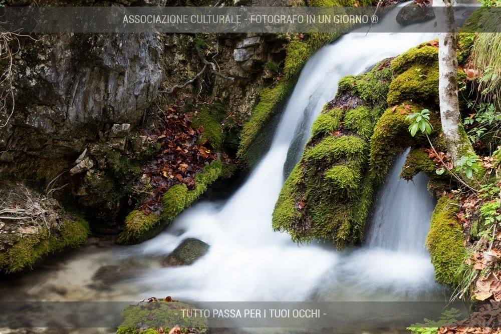 boschi-e-foreste-avanzato-01-min