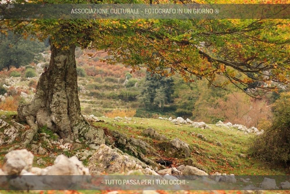 boschi-e-foreste-avanzato-05-min