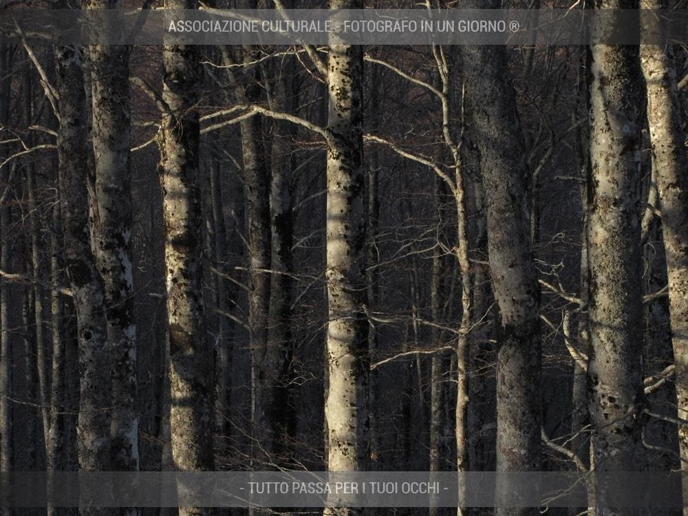 boschi-e-foreste-avanzato-08-min