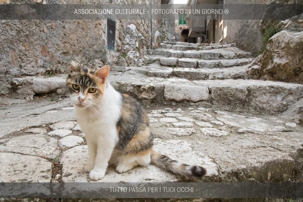 i-gatti-del-borgo-base-01-min