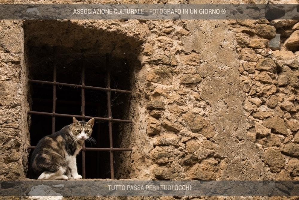 i-gatti-del-borgo-base-02-min