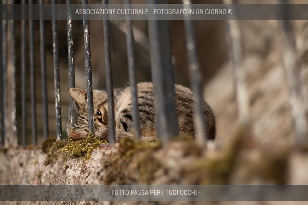 i-gatti-del-borgo-base-03-min
