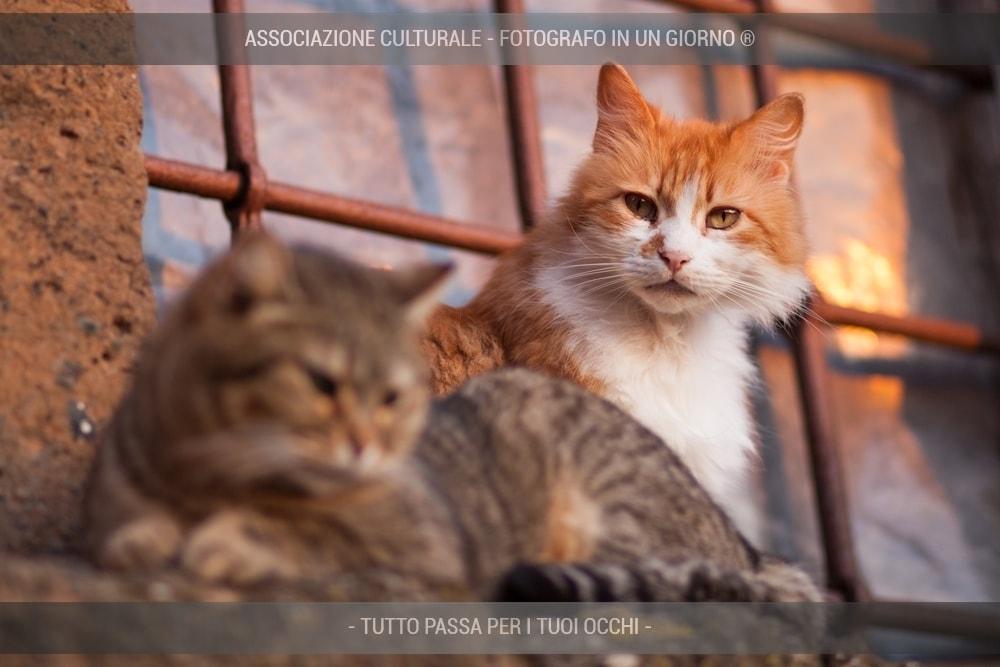 i-gatti-del-borgo-base-04-min