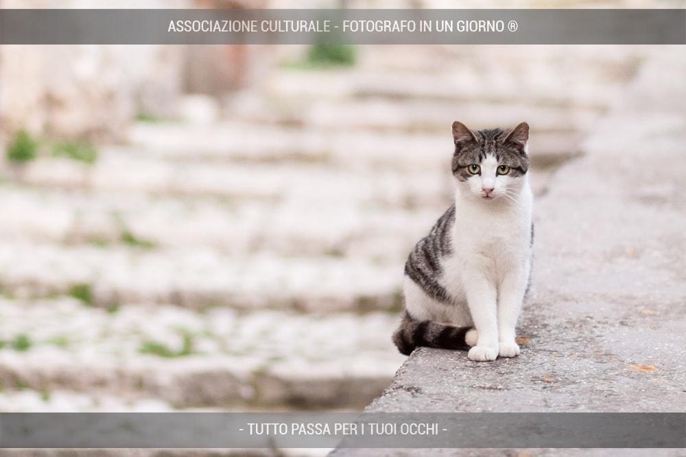 i-gatti-del-borgo-base-05-min