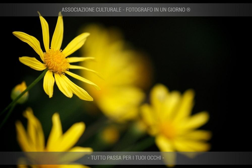 fiori-e-piante-base-01-min