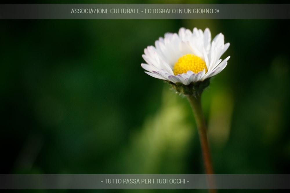 fiori-e-piante-base-02-min