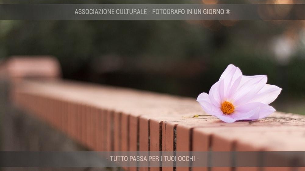 fiori-e-piante-base-04-min