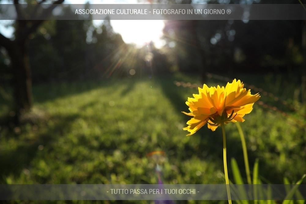 fiori-e-piante-base-05-min