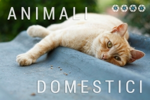 animali-domestici-base-01-scritta with Level-min