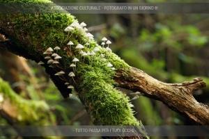 risveglio-degli-abitanti-del bosco-03-min
